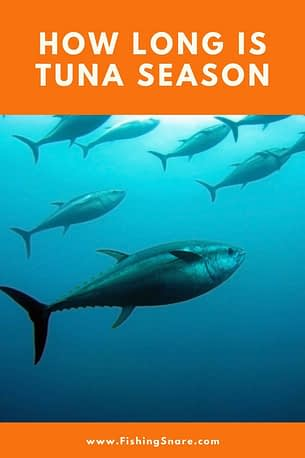 How long is Tuna fishing season