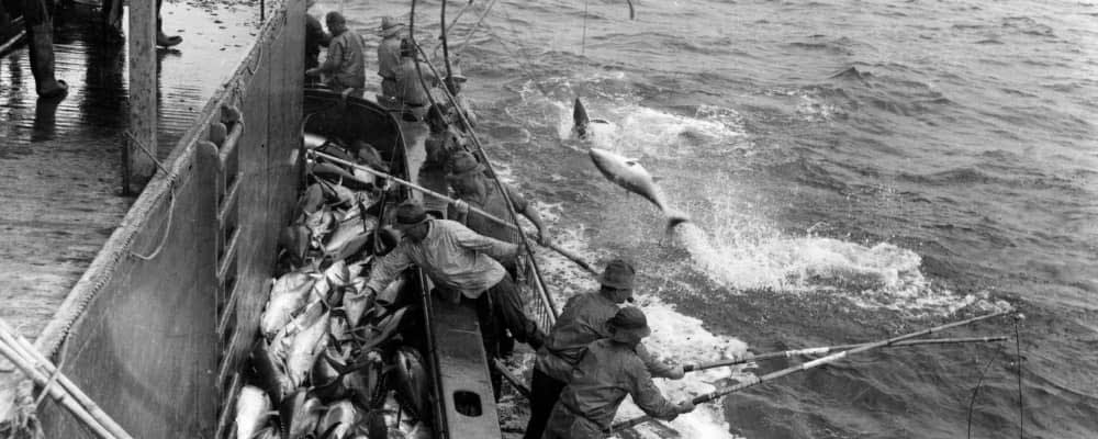 How long is Tuna season